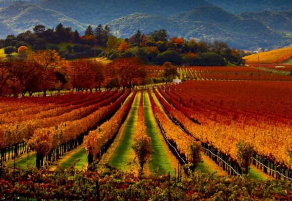 Napa and Sonoma Valleys