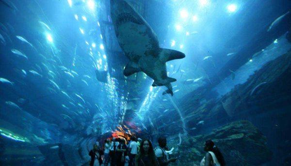 Dubai-Aquarium Underwater Zoo