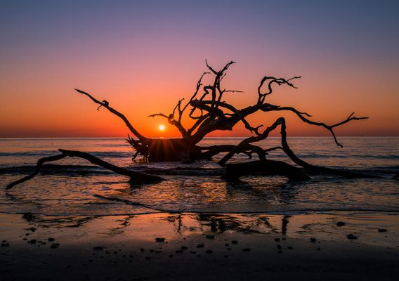 DRIFTWOOD BEACH 568x400 1 - Top Best Beaches in the U.S.A. to Visit