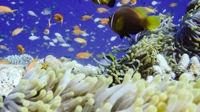 Banana Reef Madives Attractions